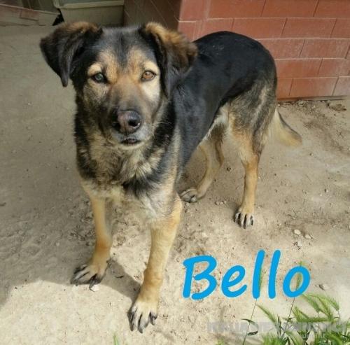 BELLO (Lucky) dolcissimo ADOZIONE DEL CUORE