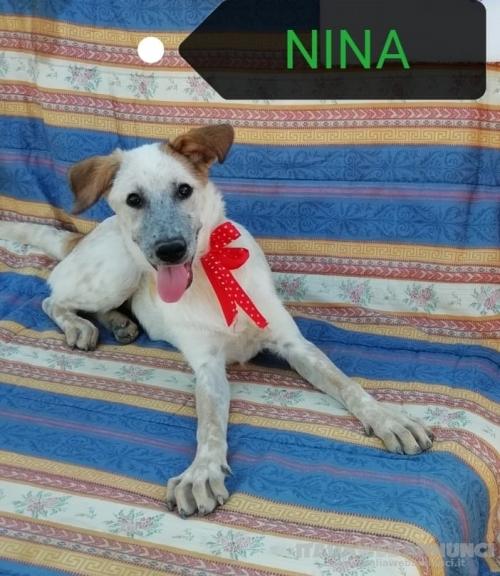 4 mesi, NINA tenero amore. Vaccinata
