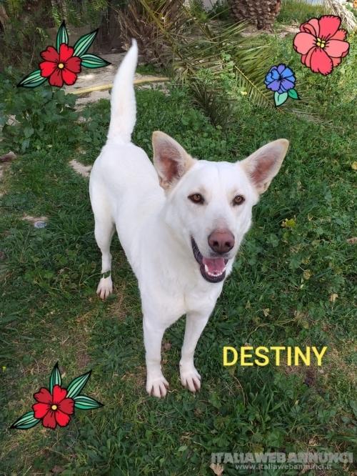 Destiny: cambiamo il suo destino per sempre!