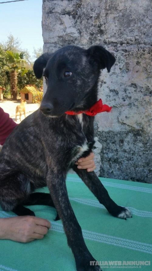 TARA è una Cucciola snella ed elegante. Taglia media 12 mesi e mezzo
