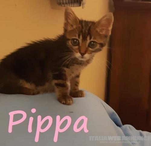 Micina femmina*PIPPA, 3 mesi