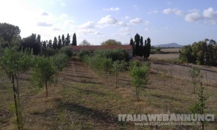 Terreno agricolo di Mq 5.000 con strutture !!!