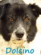 DOLCINO, occhi tristissimi, adotta un cane anziano