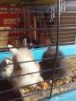 negozio di animali e toelettatura