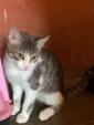 Deliziosi gattini salvati Rai Saxa Rubra offrono amore