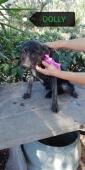 Povera piccola indifesa DOLLY: cucciola 5 mesi