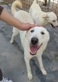 ORAZIO, un cucciolone di 2 anni, regala dolcezza e affetto