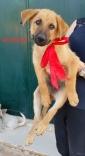 Achille, grande come il suo nome. 4 mesi, vaccinato e chip