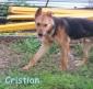 CRISTIAN cucciolone, adozione del cuore
