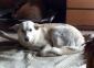 Carolina cucciolona dolcissima colore bianco