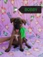 4/5 mesi BOBBY un amore di cucciolo, vaccinato chippato