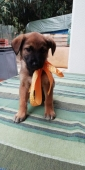 dolce cucciolina ASTRID