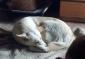 Carolina cucciolona dolcissima colore bianco 1 anno e mezzo