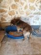 GUSTAVA, cagnolona d'età