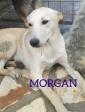 MORGAN dolce cucciolone